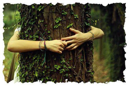 beneficios de abrazar los árboles