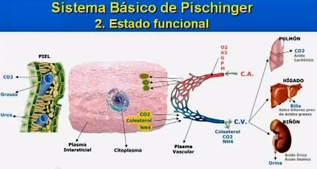 Sistema básico de Pischinger - estado funcional